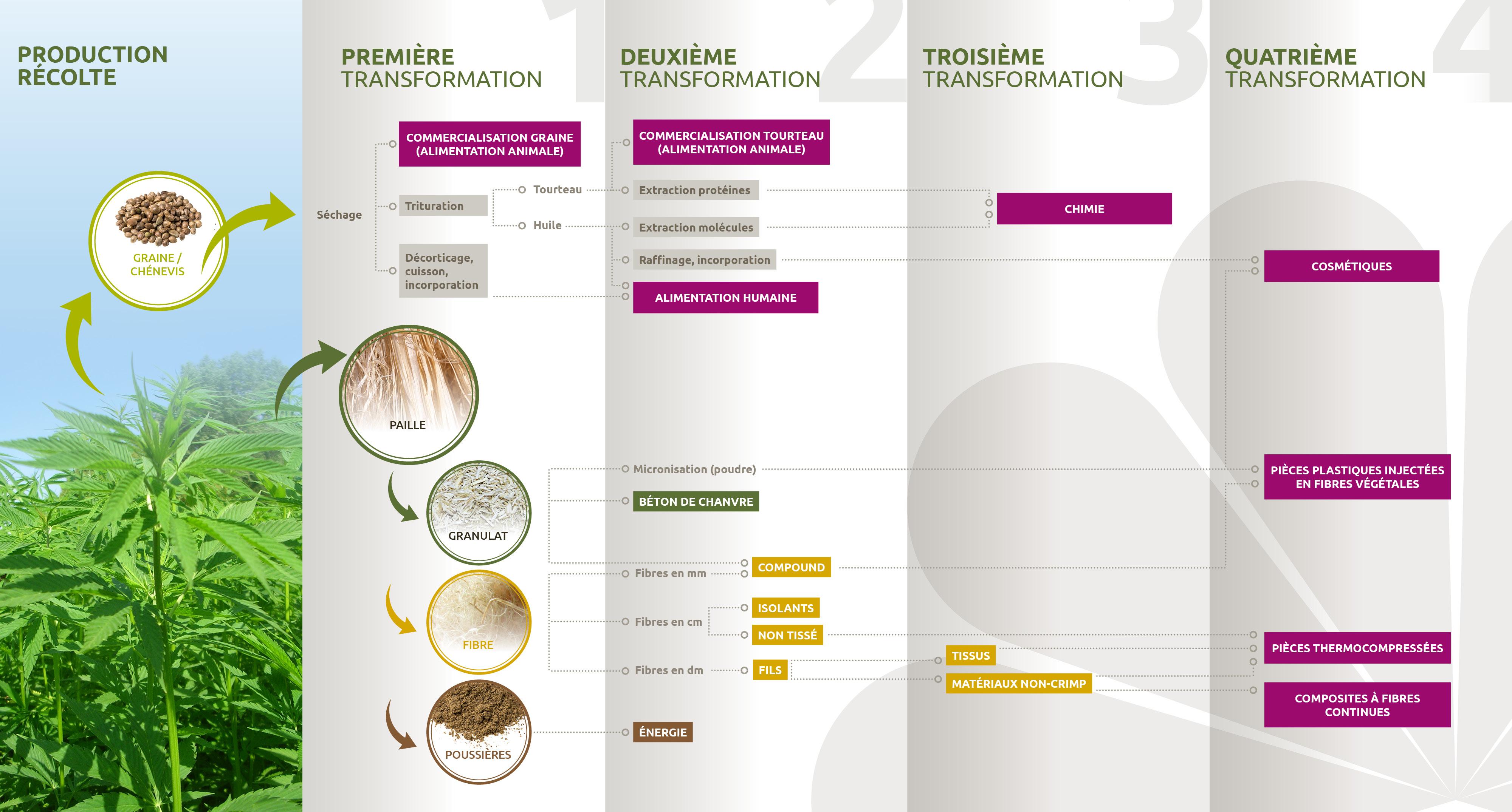 Les différents stades de transformation du chanvre